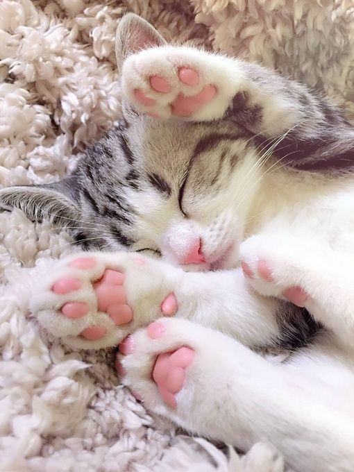 Kitten lying down with paws up
