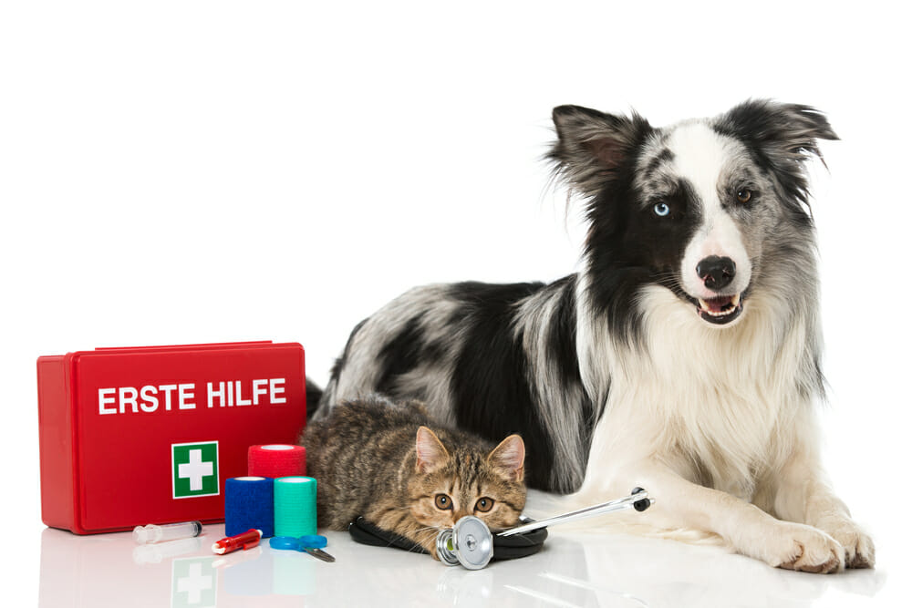 Dog and cat with a first aid kit